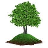 Het groeien van de boom op een grasrijke heuvel Stock Foto's