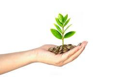 Het groeien van de boom op muntstukken Royalty-vrije Stock Foto