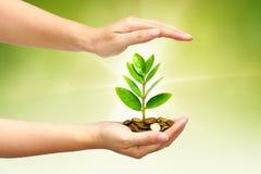 Het groeien van de boom op muntstukken Stock Afbeelding