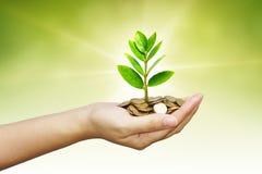 Het groeien van de boom op muntstukken Stock Fotografie