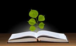 Het groeien van de boom van boek Stock Afbeelding