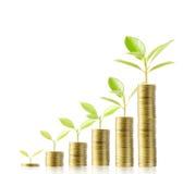 Het groeien van de boom van geld Stock Fotografie