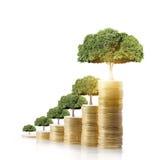 Het groeien van de boom van muntstukken Royalty-vrije Stock Foto's