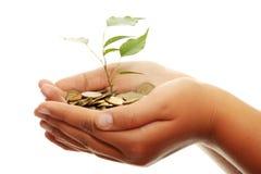 Het groeien van de boom van stapel van muntstukken Stock Foto's
