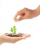 Het groeien van de hand en van de groene installatie van de muntstukken Stock Foto's