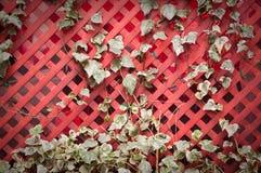 Het groeien van de klimop op een latwerk. royalty-vrije stock afbeeldingen