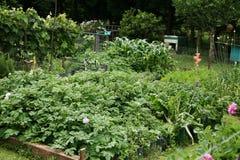 Het groeien van groenten royalty-vrije stock afbeelding