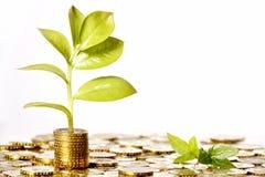 Het groeien van het geld Stock Foto