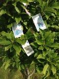 Het groeien van het geld op een boom Stock Foto's