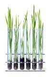 Het groeien van het gras Royalty-vrije Stock Foto's