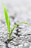 Het groeien van het gras van barst in asfalt stock afbeelding