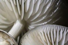Het groeien van paddestoelenporselain op dood hout in het bos royalty-vrije stock afbeeldingen