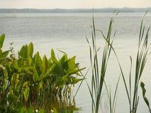 Het Groen van het meer Royalty-vrije Stock Afbeeldingen