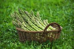 Het groene Asperge plukken van tuin royalty-vrije stock foto