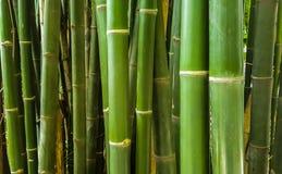 Het groene bamboe stamt rechtstreeks Royalty-vrije Stock Fotografie