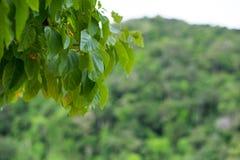 Het groene blad en heeft berg en vage het overzees is achtergrond Thi Royalty-vrije Stock Afbeelding