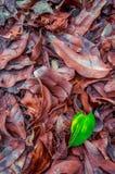 Het groene blad met bruine droog doorbladert in de Herfstseizoen stock afbeeldingen