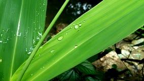 het groene blad trekt water Royalty-vrije Stock Foto