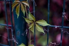 Het groene blad van de herfst royalty-vrije stock fotografie