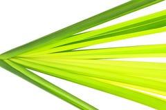 Het Groene blad van de multi-schaduw van de papyrus van Cyprus Stock Foto's