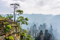 Het groene boom groeien bovenop rots (Avatar Bergen) stock foto
