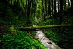 Het groene bos van de lente royalty-vrije stock afbeeldingen