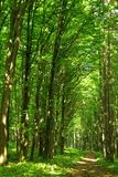 Het groene bos van de zomer Royalty-vrije Stock Afbeeldingen