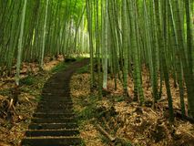 Het groene Bos van het Bamboe Stock Foto