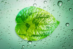 Het groene concept van het bladmilieu bewaart de aarde Royalty-vrije Stock Foto