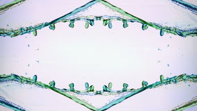 Het groene en blauwe water bespatten over witte achtergrond stock video