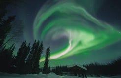 Het groene en purpere aurora borealis krullen boven gesilhouetteerde bomen en loods in Alaska Royalty-vrije Stock Afbeeldingen