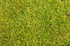 Het groene gazon van golfcursussen Royalty-vrije Stock Foto