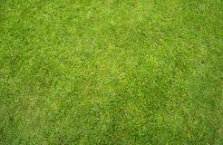 Het groene gazon van het Gras Stock Afbeeldingen