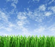 Het groene gazon van het gras met hemelachtergrond Stock Foto