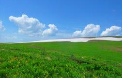 Het groene gebied in de lente Stock Fotografie