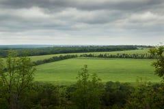 Het groene gebied van de de zomertarwe Royalty-vrije Stock Foto's