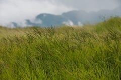 Het groene gebied van de grasweide met berg en hemelachtergrond Royalty-vrije Stock Foto's