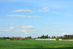 Het groene Gebied van de Tarwe, Blauwe Skyand en oud Landbouwbedrijf Stock Afbeeldingen