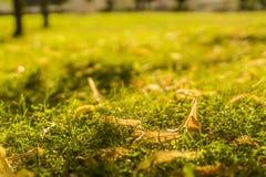 Het groene gebied van het de zomerpark onder zonneschijn royalty-vrije stock fotografie