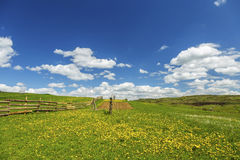 Het groene gebied van het landschap met paardebloem stock afbeeldingen