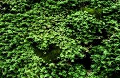 Het groene gegroeide mos behandelt de ruwe stenen in het bos Stock Fotografie