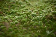 Het groene gegroeide mos behandelt de ruwe stenen in de meest forrest Show royalty-vrije stock afbeeldingen