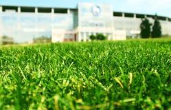 Het groene Gras Stock Afbeeldingen