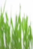 Het groene gras blured Stock Fotografie
