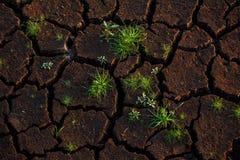 Het groene gras groeien op barst droog land royalty-vrije stock foto