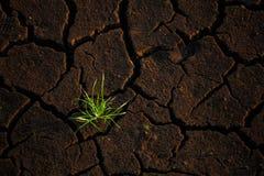 Het groene gras groeien op barst droog land stock afbeelding