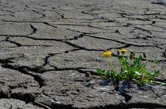 Het groene gras groeien op barst droog land stock foto's