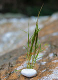 Het groene Gras groeit achter rots als Nieuw het Levensconcept Stock Foto