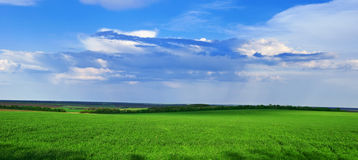 Het groene gras groeit op het gebied Stock Foto's