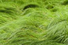 Het groene gras groeit over een weg in het meest forrest royalty-vrije stock foto